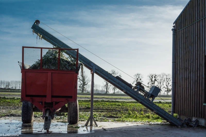 Tout savoir sur le poireau de Normandie : AOP, comment le cuisiner, recettes, production...